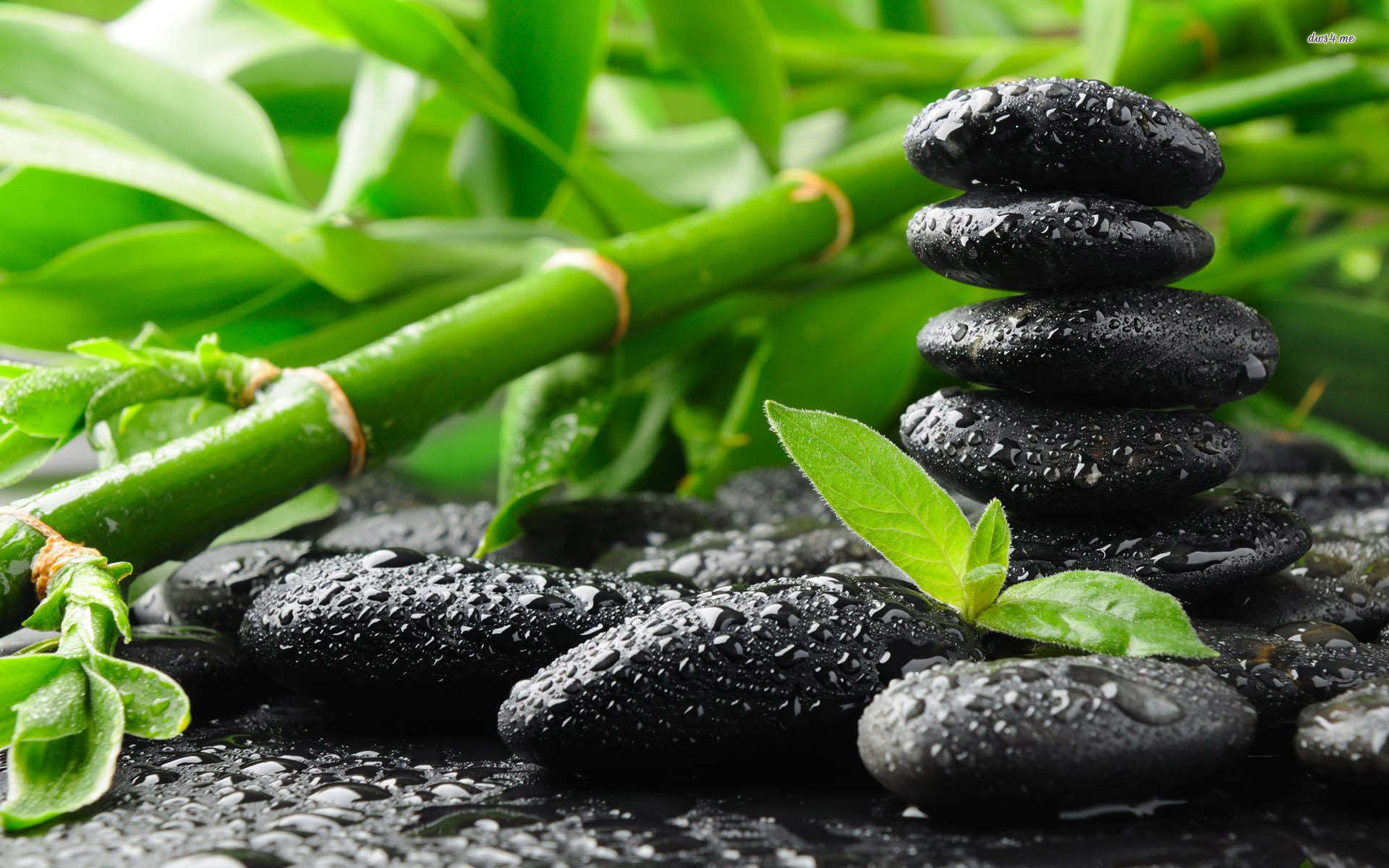 Zen like vipassana theravadin for Bureau zen feng shui